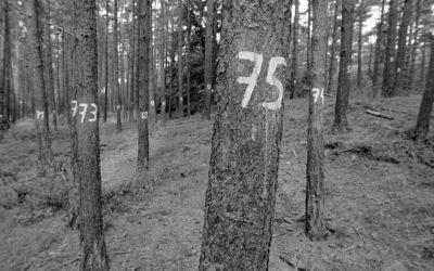 Ich seh den Wald vor lauter Zahlen nicht